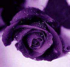 courtesy of www.tumblr.com