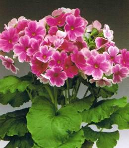 http://www.treesflowers.com/