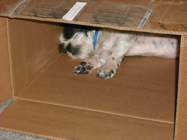 Sam inside his box