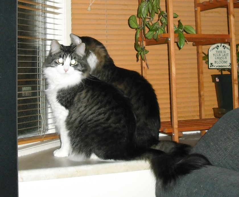 (c) JLPhillips 2013 Pouncer and Notwen plotting to take over the world!
