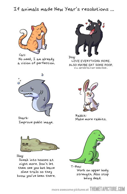funny-animals-New-Year-resolutions-2013 (1)