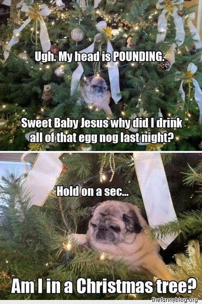 funny-dog-Christmas-tree-egg-nog