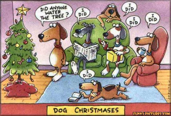 funny-dog-christmas_130434703642