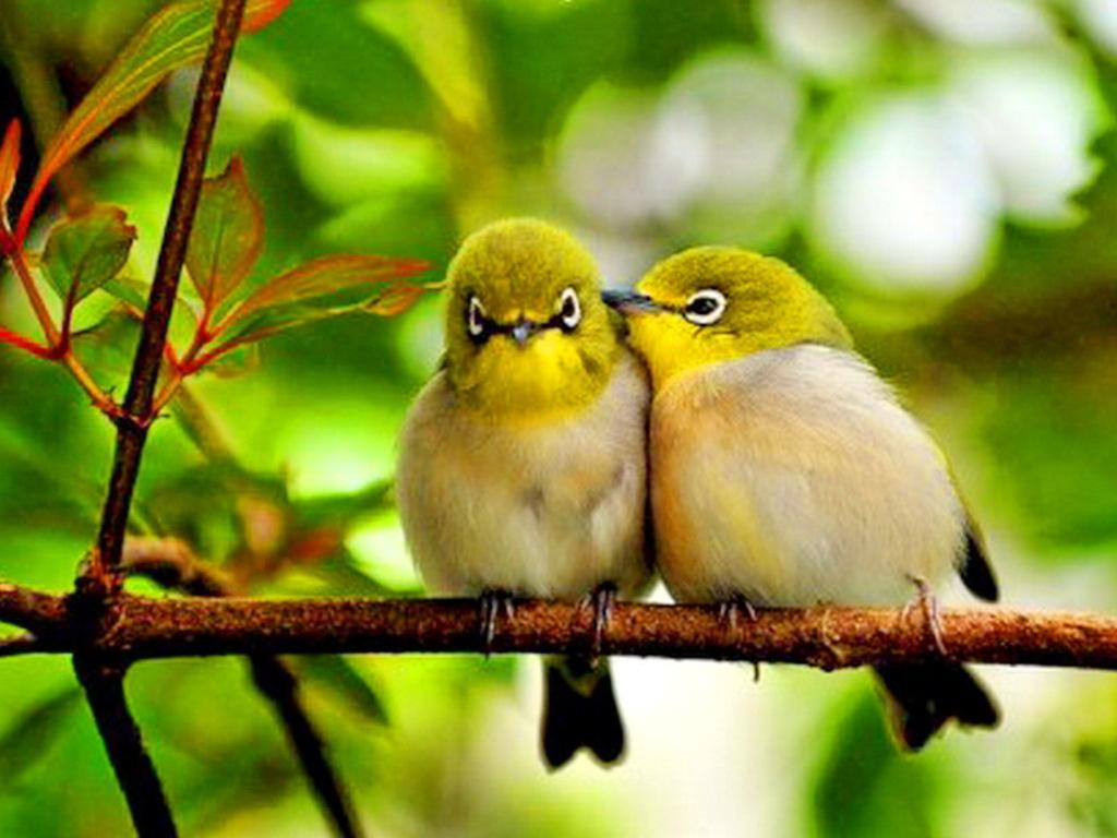 поздравление птицы поют это
