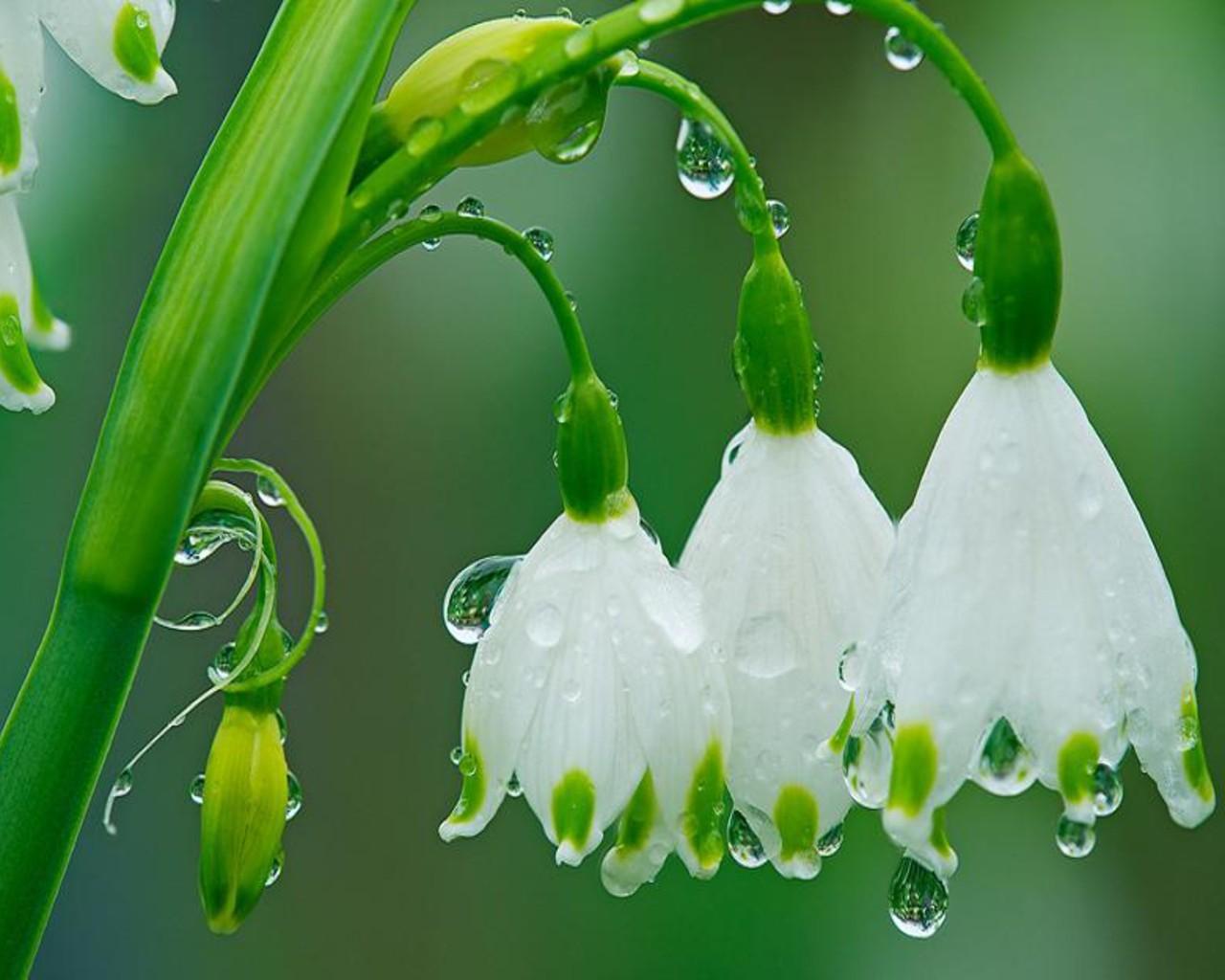 rain flowers – To Breathe is to Write