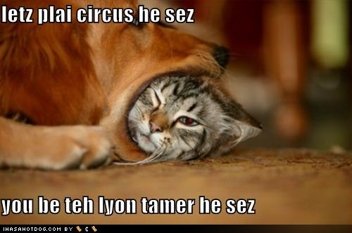 funny-dog-pictures-dog-and-cat-play-circus