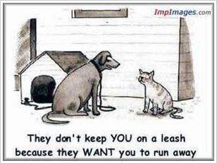 Dog-Cat-Cartoon