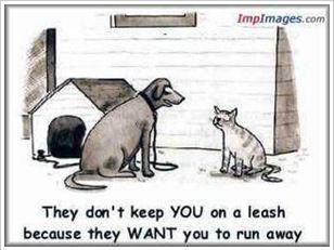 Dog-Cat-Cartoon