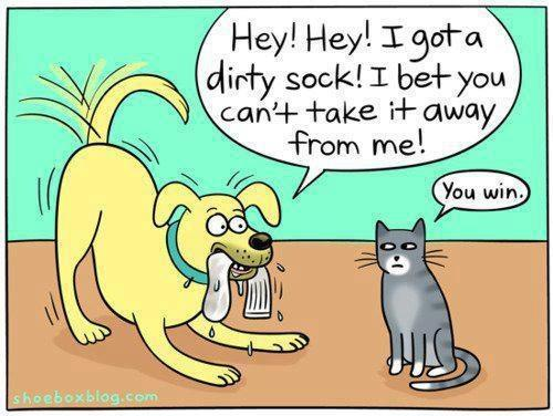 Funny-dog-and-cat-cartoon