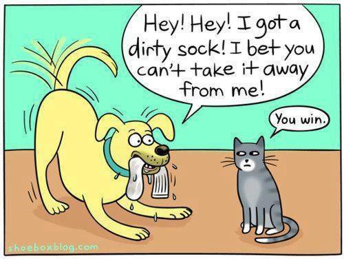 Funny-dog-and-cat-cartoon