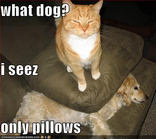 Funny Dog Pictures With Captions (15)