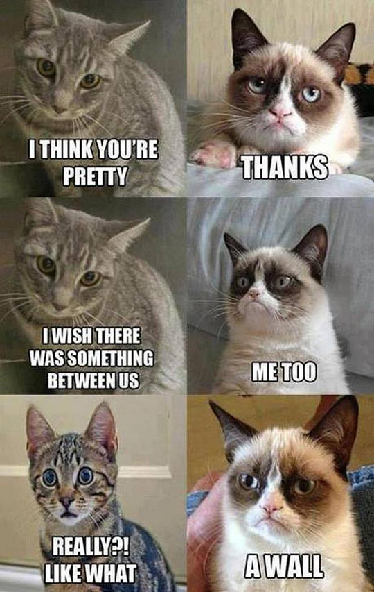 funny-Grumpy-Cat-conversation-with-cute-cat