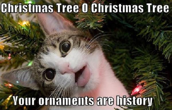 christmascat1