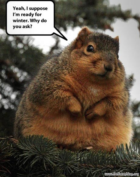 ready-for-winter-funny-fat-squirrel-photo-why-do-you-ask