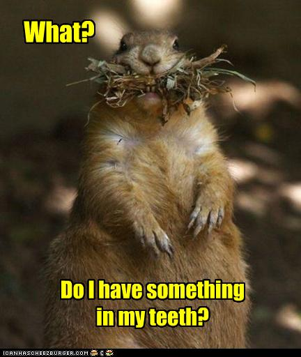 funny-pictures-groundhog-has-something-in-teeth