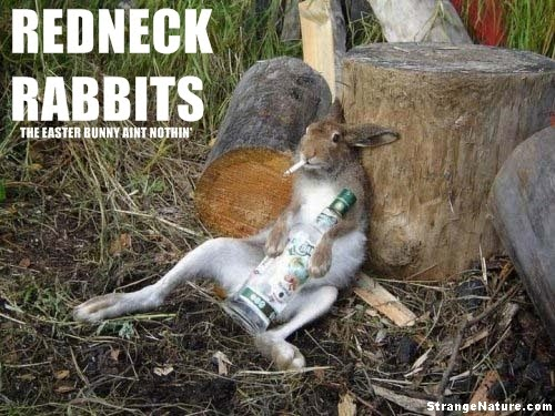 Funny rabbit images 3