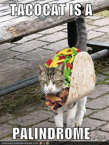 Funny-pictures-taco-cat-is-a-palindrome