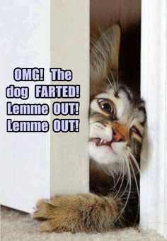 dogfarted