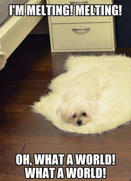 Funny-Animal-Memes
