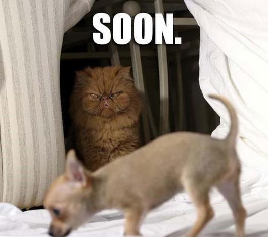 funny-meme-animals-soon-001