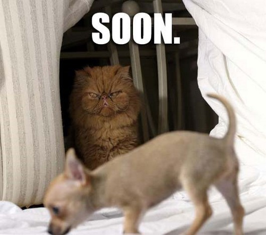 funny-meme-animals-soon-001