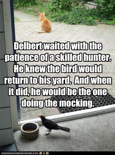 60f31_funny-pictures-cat-waits-for-bird