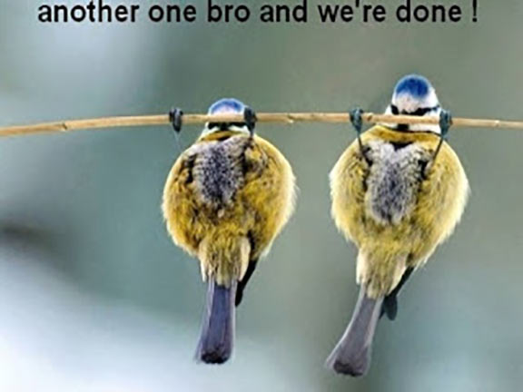 Funny-Bird-Pictures-10