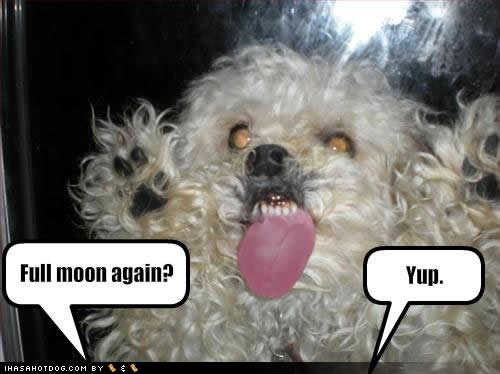 Funny Dog Pictures With Captions (18)