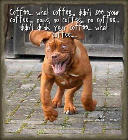 Funny-dog-running-hyped-on-coffee-Funny-dog-photo-with-caption