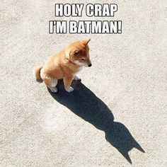 dogbatman