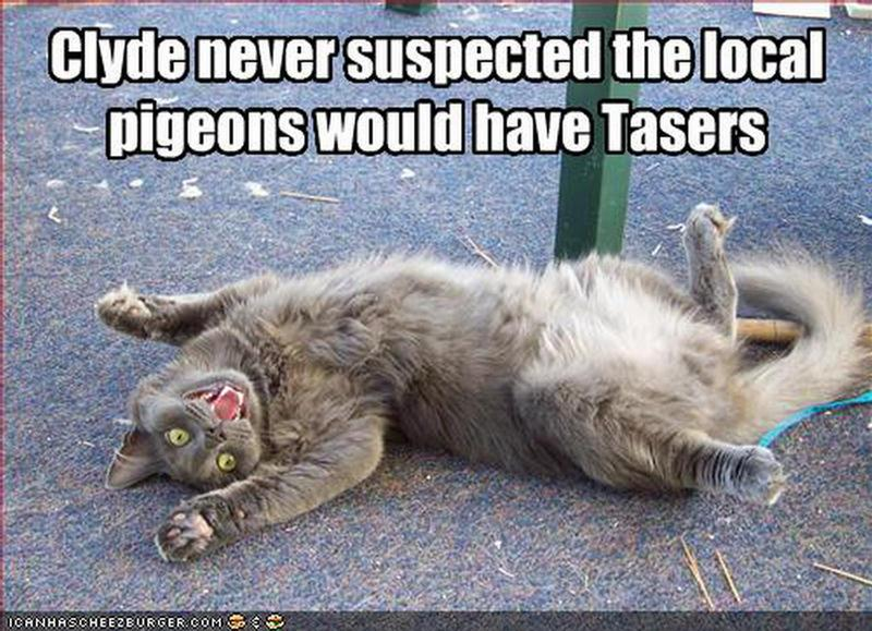 Funny Memes For Animals : Funny animal captions part pics amazing creatures