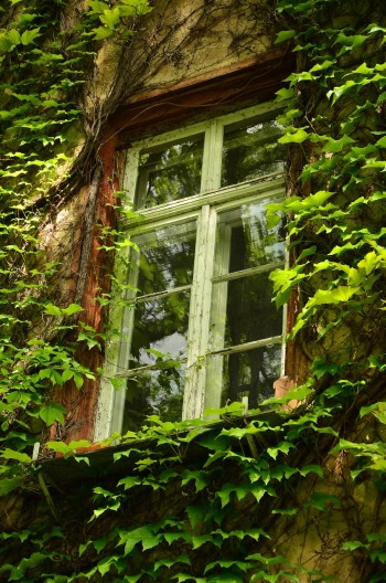 window-1433538_1280