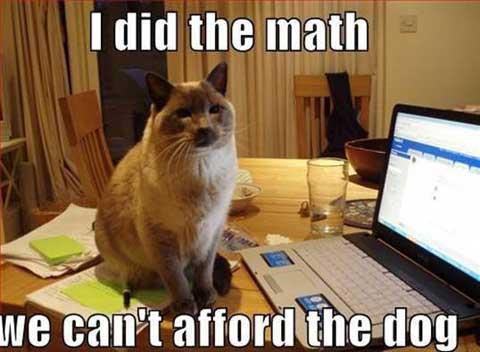didthemath_funny_animal_memes