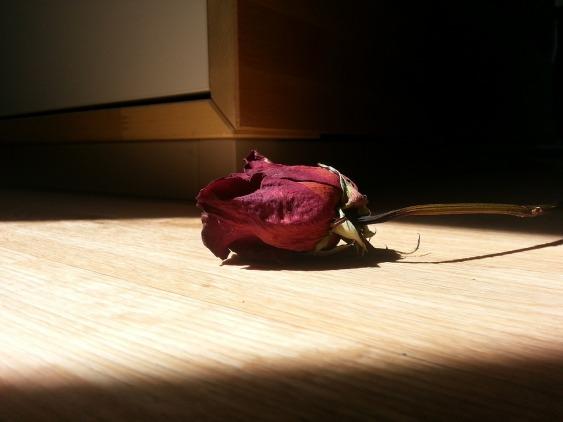 rose-370922_1280