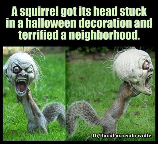 a-funny-animals-13