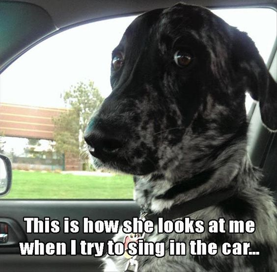 dogsing