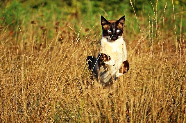 cat-1722754_640